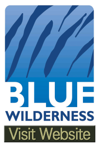 Blue Wildlierness - Shark and Marine Documentary Logistics Provider in South Africa