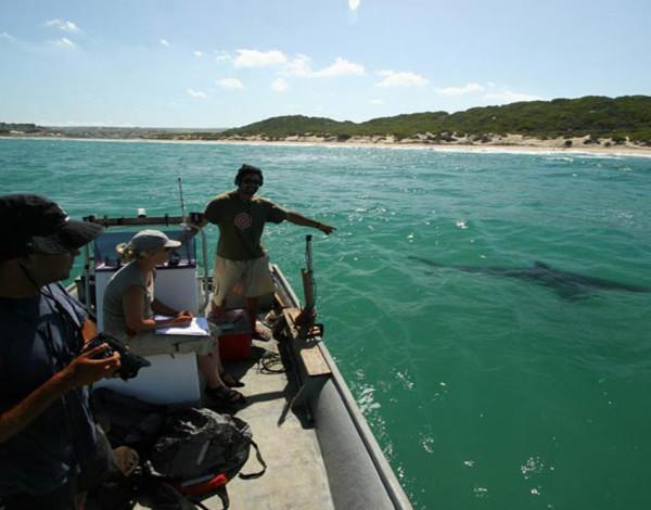 Interview with Critic Magazine: Ryan Johnson – Great White Shark Expert