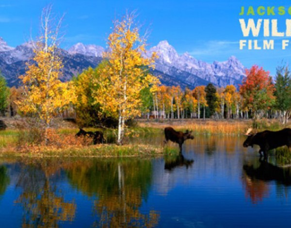 How to nail it at a wildlife film festival