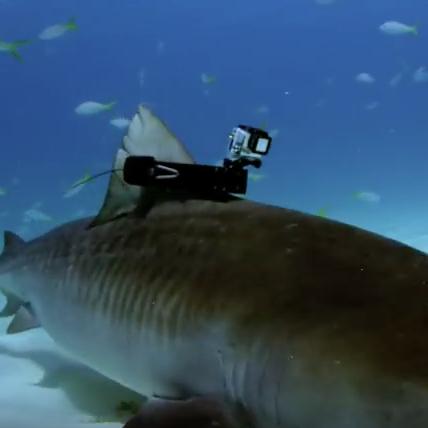 Shark fin cam