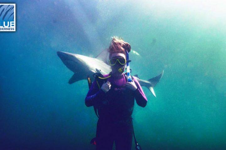 Shark Diveng at the Aliwal shoal