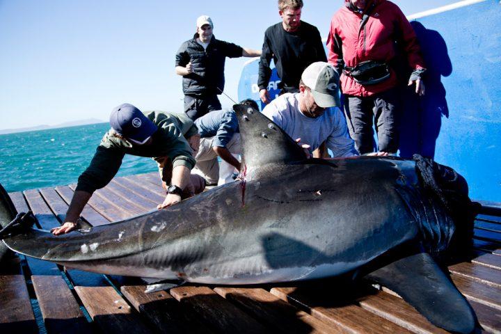 Shark Wranglers1