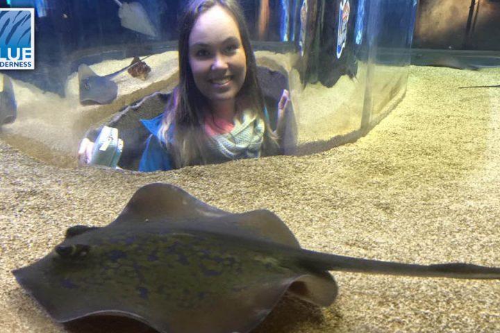 Shark diving volunteers at two oceans aquarium