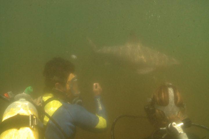 Shark meet croc6
