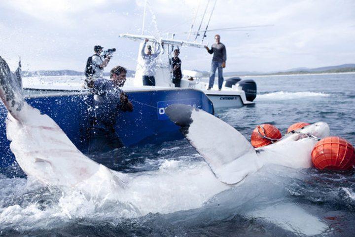 Shark wranglers3