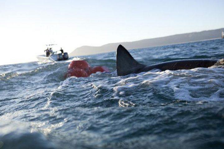 Shark wranglers4