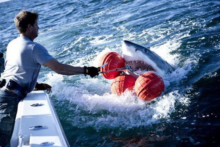 Shark wranglers5