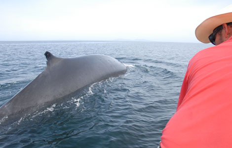 Squid vs. Whale aka Battle of the Giants aka Sperm Whale versus Humbolt SquidNGC US- Ep Code: 4332
