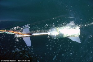 Tow cam is essential for white shark breach filming