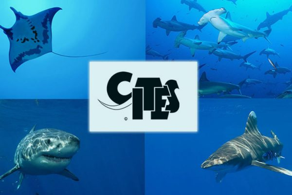 Shark Research and conservation achivements -cites