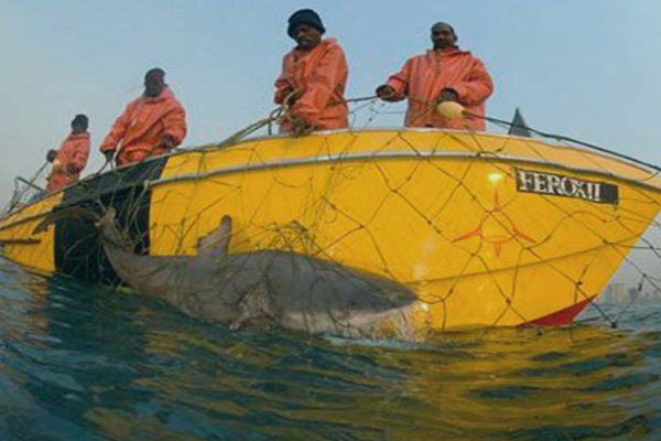 Shark Research and conservation achivements - removal of shark nets