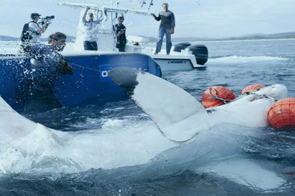 Shark Research and conservation achivements - shark wranglers