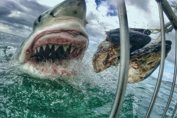 Shark Scientist South Africa - shark ecotourism research