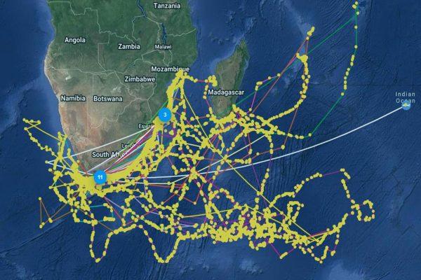 Shark Scientist South Africa - shark satellite telemetry